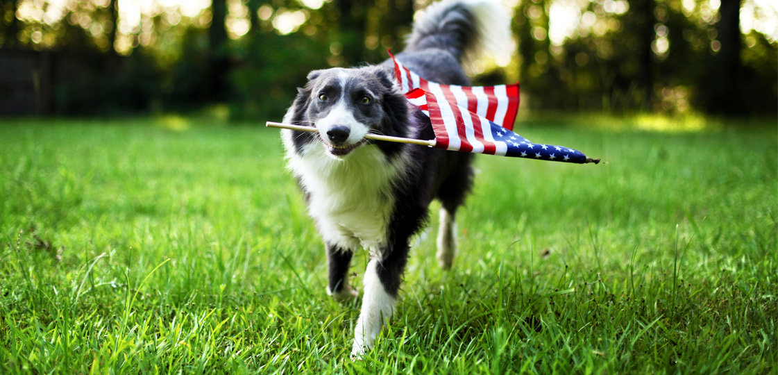 How to Keep Your Dog Safe on the 4th of July | NurturedPaws.com/Blog