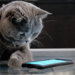 11 Cat Accounts to Follow on Instagram Right Meow | NurturedPaws.com/Blog