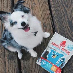 9 Gifts for Your Dog | NurturedPaws.com/Blog