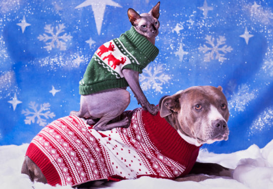 A Bunch of Cute Dogs (and Some Cats) in Sweaters | NurturedPaws.com/Blog