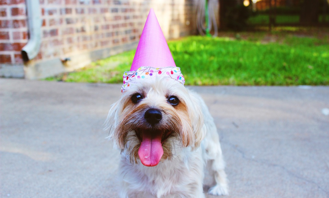10 Ways to Spoil Your Dog Rotten on August 10 | NurturedPaws.com/Blog