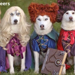 We're Losing Our Minds Over These Dogs in Halloween Costumes | NurturedPaws.com/Blog