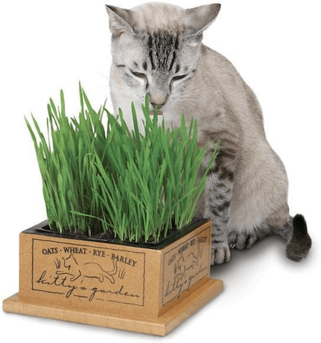 Gifts for Pets   NurturedPaws.com/Blog