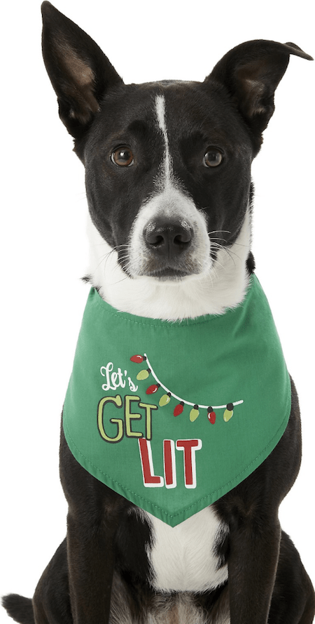Gifts for Pets | NurturedPaws.com/Blog
