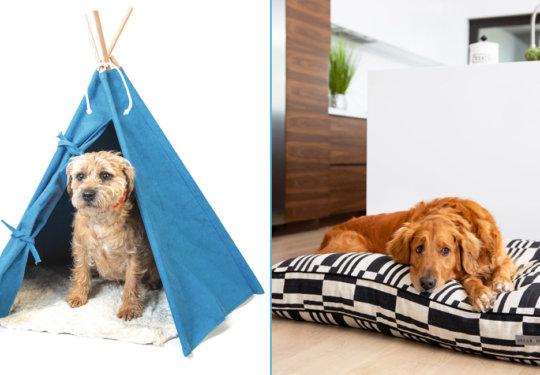 Valentine's Day Gifts for Pets | NurturedPaws.com