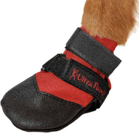 Cooling Dog Accessories To Keep Your Pup Totally Chill This Summer | NurturedPaws.com/Blog