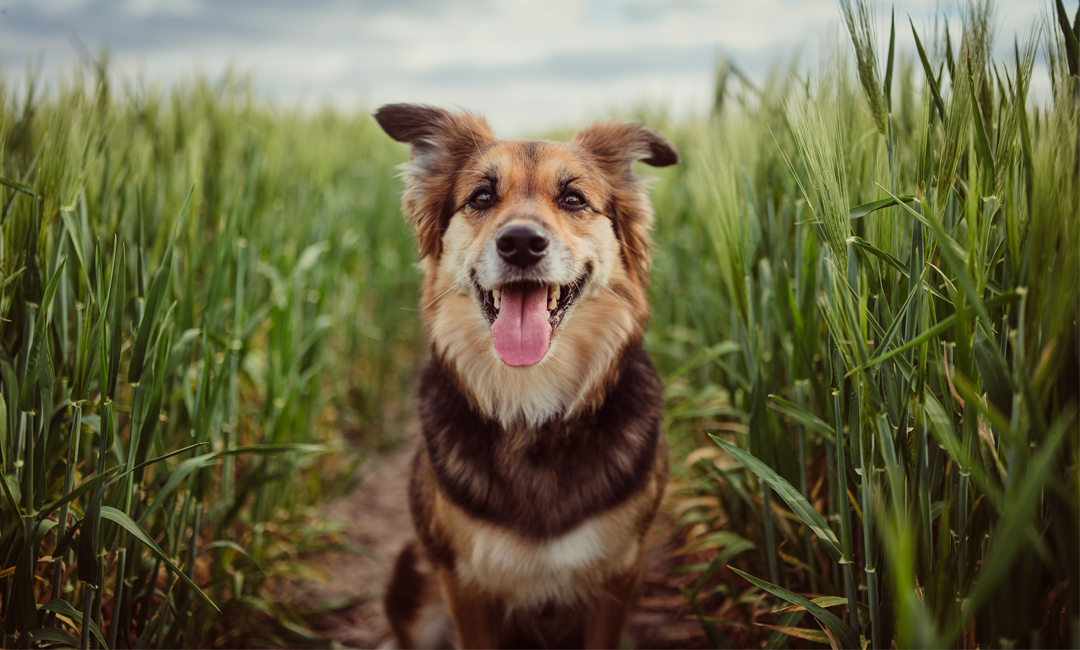 Treat Your Mutt on National Mutt Day | NurturedPaws.com/Blog