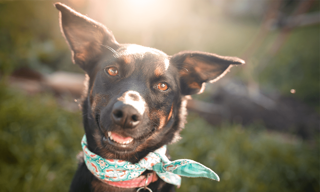 8 Black-Owned Pet Brands You'll Fall in Love With | NurturedPaws.com/Blog