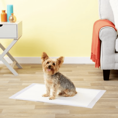 Everything You Need To Welcome A New Puppy To Your Space | NurturedPaws.com/Blog