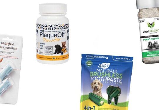 Dog Dental Accessories for Some Tooth TLC | NurturedPaws.com