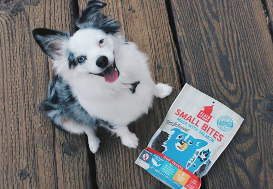 9 Gifts for Your Dog | NurturedPaws.com/Blog