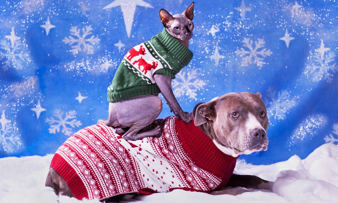 A Bunch of Cute Dogs (and Some Cats) in Sweaters   NurturedPaws.com/Blog