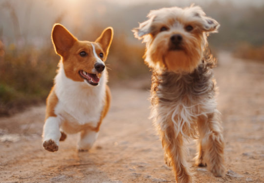 7 Ways to Spoil Your Dog on National Pet Day | NurturedPaws.com/Blog