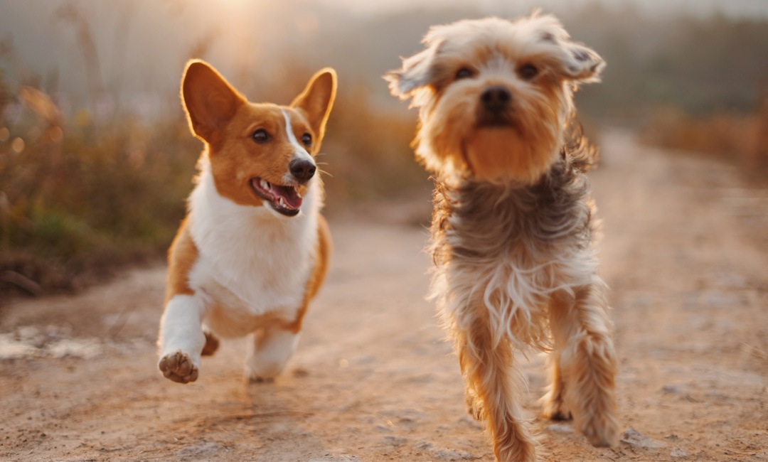 7 Ways to Spoil Your Dog on National Pet Day   NurturedPaws.com/Blog